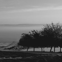 Göçebe Ağaçlar Köklerini Nereye Uzatır?